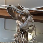 85 milyon yıllık fosilin yeni bir tür olduğu ortaya çıktı!