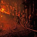 Dünyayı saran orman yangınları hakkında 5 soru- 5 cevap