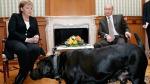 Liderler ve fobileri: Merkel köpekten çok korkuyordu
