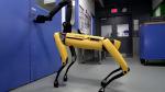 Boston Dynamics, köpek şeklindeki robotunu seri üretime geçiriyor!
