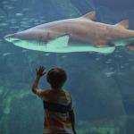 Alışveriş merkezinde köpek balığı dehşeti: 6 yaşındaki kıza saldırdı