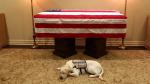 'Baba' Bush'un rehber köpeği tabutun başından ayrılmıyor