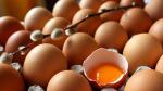 Tıpta son nokta: Kanser ilacı yumurtlayan tavuk