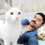 Kedisinin iyileşmesi için 190 bin lira harcadı