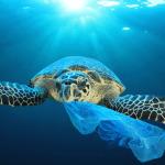 Küresel problem: Plastik atıklar kaç oranında geri dönüştürülüyor?