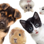 Yasalara rağmen hayvan hakları ihlalleri devam ediyor