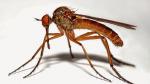 Aman dikkat: Sivrisinekler kan grubuna göre geliyor