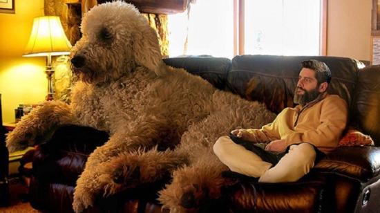 Photoshop kullanımını ile köpeğinin boyutlarını eğlenceli bir şekilde değiştiren fotoğrafçının 18 çalışması