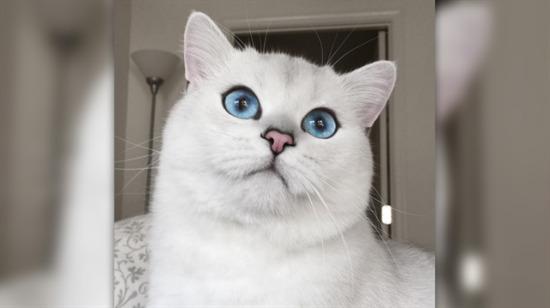 Eşek gözleriyle sanal dünyaya damga vurmuş fenomen kedi: Coby