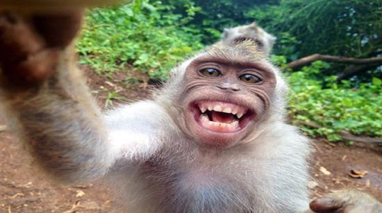 Selfie çekilme hastalığına yakalanmış 20 komik hayvan