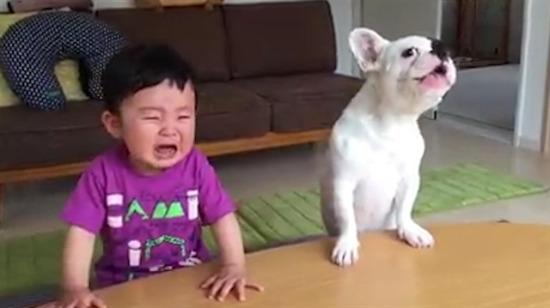 Hızlı davranan köpek bebeğin yemeğini yiyor
