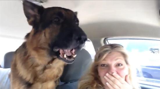 Veterinere geldiğini anlayan köpek bakın nasıl tepki verdi
