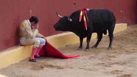 Köşeye sıkışan matadora saldırmayan boğanın ilginç hikayesi
