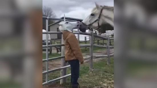 Kadın maskeyi çıkarınca at bakın ne yaptı