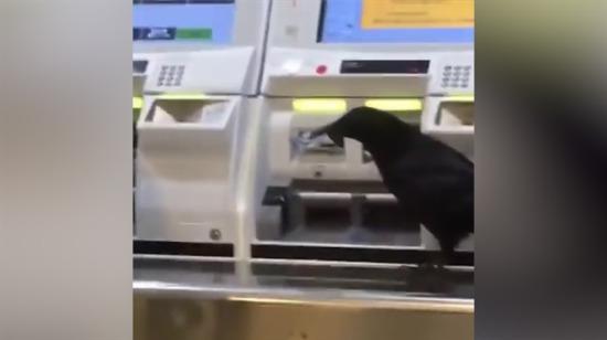 Çaldığı kredi kartıyla otomattan bilet almaya çalışan karga