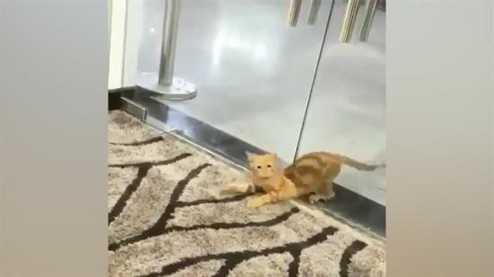Fare deliğinden geçen azimli kedi
