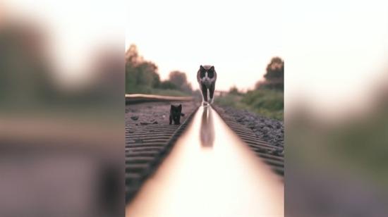 Tren raylarında yavrusuyla birlikte yürüyen cool kedi