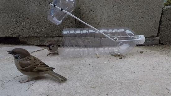 Plastik pet şişeden serçe tuzağı