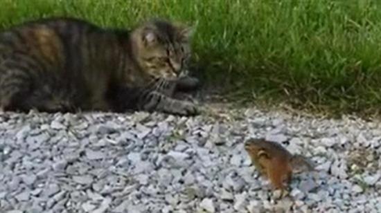 Tüm farelerin intikamını alan kareteci sincap!
