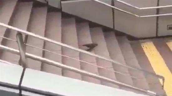 Kuş olduğunu unutmuş çaktırmayın