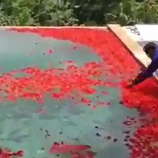 Günler süren havuz süslemesi sonucu havuzun halıya benzemesi