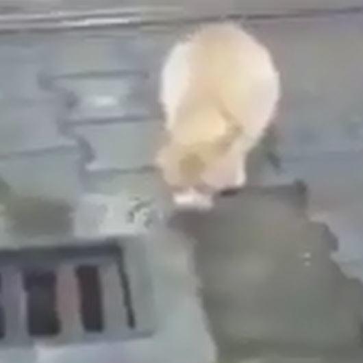 Hareket etmek için kedinin su içmesini bekleyen koca yürekli makinist