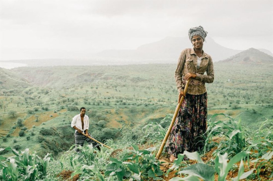 İki çiftçi, Afrika'nın batı kıyısındaki Cape Verde'de mısır tarlalarında çalışırken...
