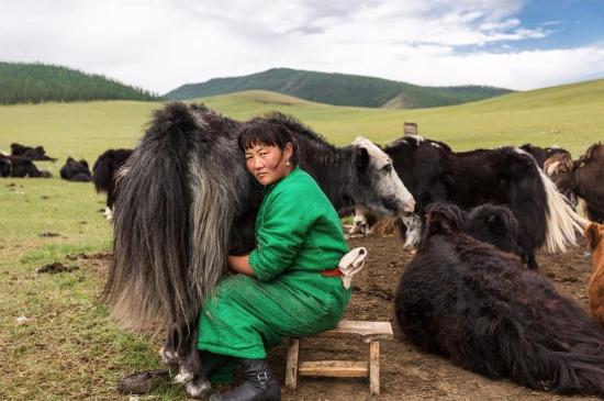 Moğol kadın günün ilk saatlerinde işinin başında
