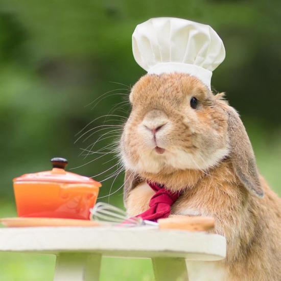 Bugünkü menümüzde tavşan yahni var