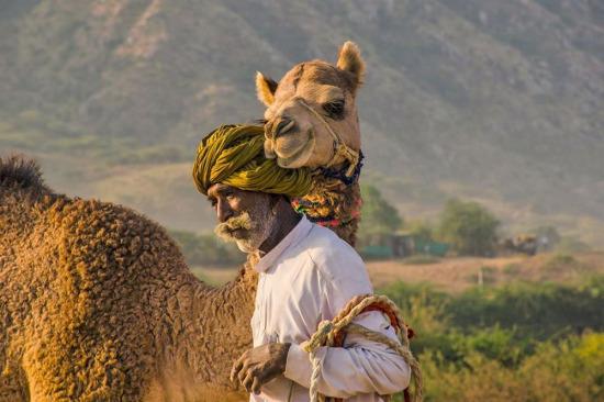 Hindistan'ın Pushkar Deve Fuarı her yıl yaklaşık 200.000 ziyaretçiyi çekiyor...