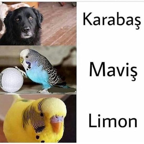 Ülkemizde gelenekselleşmiş hayvan isimleri