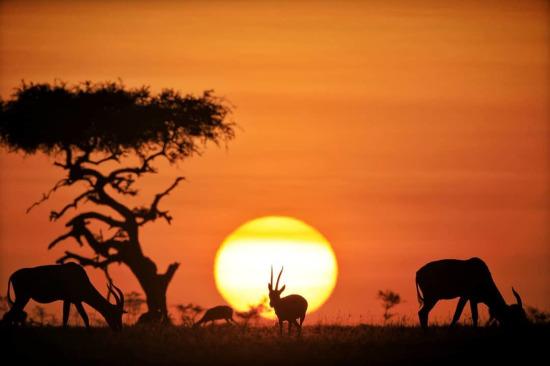 Afrika'nın güzel gün batımları
