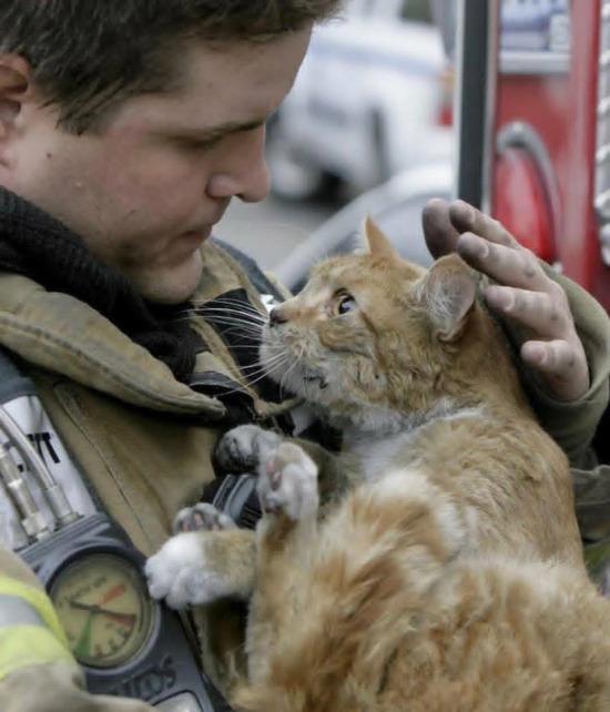 Yangından kurtarılan kedinin bakışları her şeyi anlatıyor