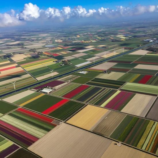 Çiçek açan lale tarlalarının yukarıdan görünüşü, Hollanda