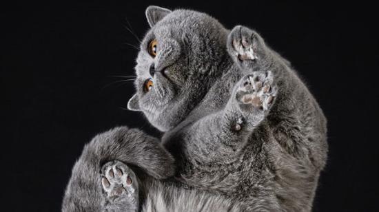 Kedi patilerine bayılanların seveceği 20 fotoğraf