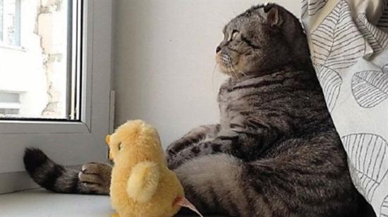 'O An' da yakalanmış olan kedilerin ilginç halleri