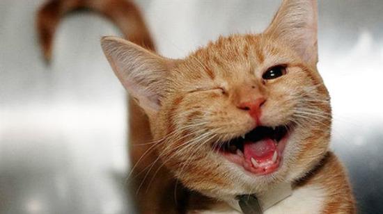 Yüzünüzde tebessüm oluşturacak 25 mutlu hayvan fotoğrafı