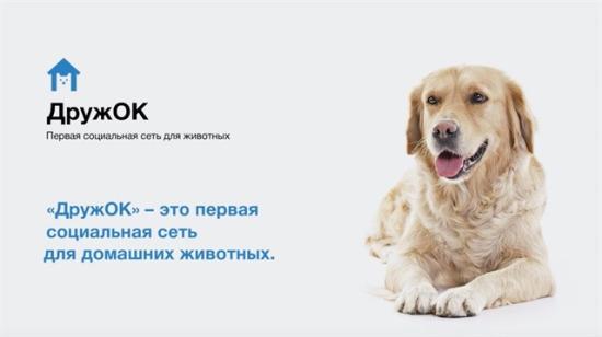 Rusya'da köpeklere özel 'Facebook' çıkıyor