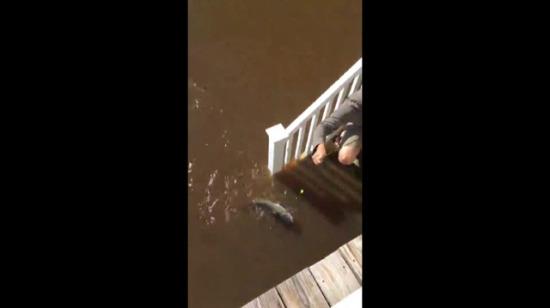 Sel sularında tuttuğu balık şaşırttı