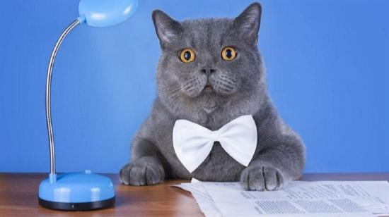 Evinize kedi alırken mülakat yapmaya ne dersiniz?