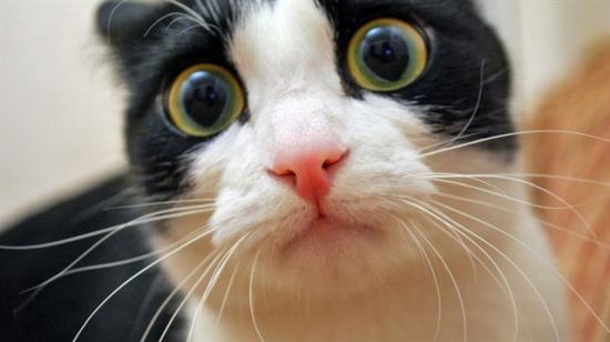 Kedilerin hayatınıza kattığı 10 bilinmeyen yarar