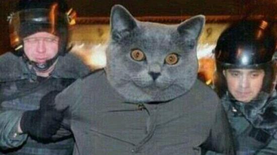 Teknolojik yenilikler sizi değil kedileri etkilemiş olabilir mi?