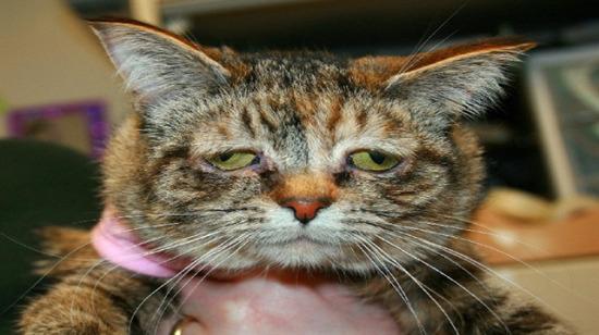 Pazartesi sendromunu iliklerine kadar yaşayan 15 efkarlı kedi