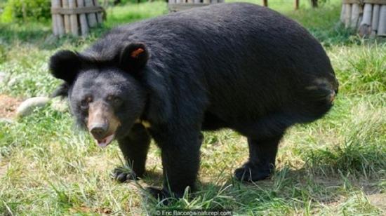 Yamyamlığın böylesi: Bu hayvanlar kendi kendilerini yiyorlar