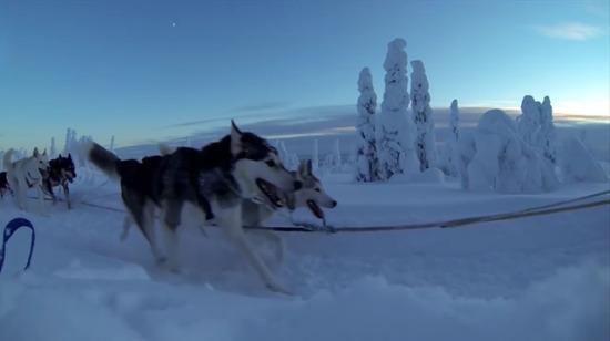 Husky köpeklerin çektiği kızakla, harika bir kar manzarasında yolculuk...
