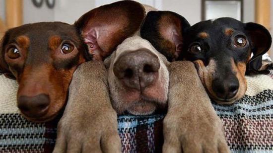 Yaptıkları şapşallıklarla görenleri kendilerine hayran bırakan Snapchat köpekleri!