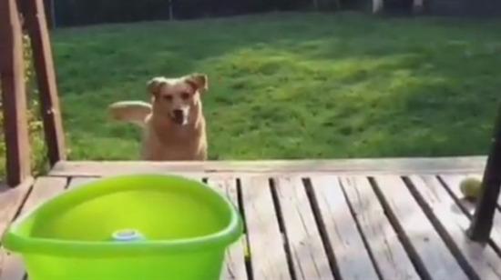 Kendini eğlendiren sevimli köpek