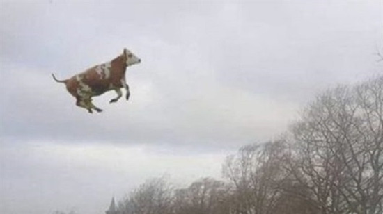 Hey inek nereye gidiyorsun?