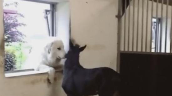 Dostluk kazanacak!