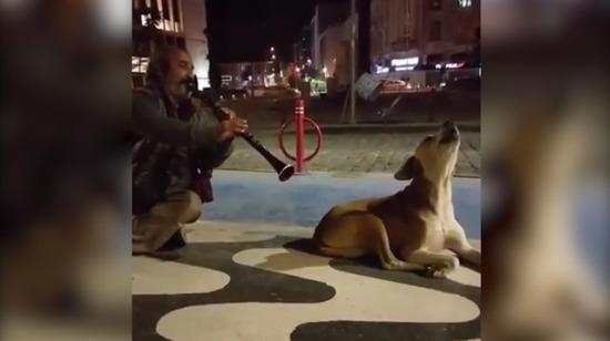 Klarnet sesine dertli dertli eşlik eden sokak köpeği
